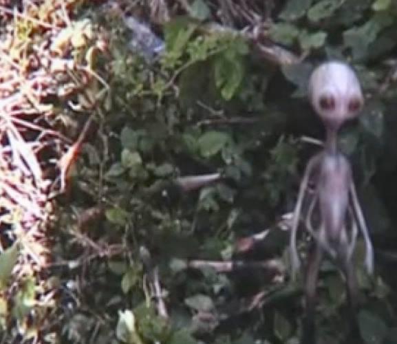 المخلوقات الفضائيه جن.